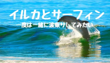 イルカとサーフィン!サーファーなら一度は一緒に波乗りしてみたい