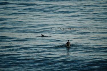 サーファーとサメ
