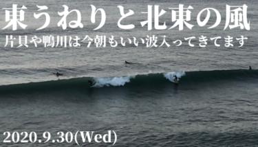 千葉の片貝や鴨川はいい波入ってます!東うねりが続き明日まで楽しめそう【2020.9.30】