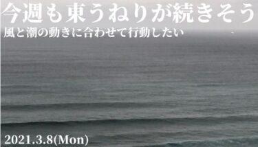 今週も東うねりが続きそう~風と潮の動きに合わせて行動したい【2021.3.8】